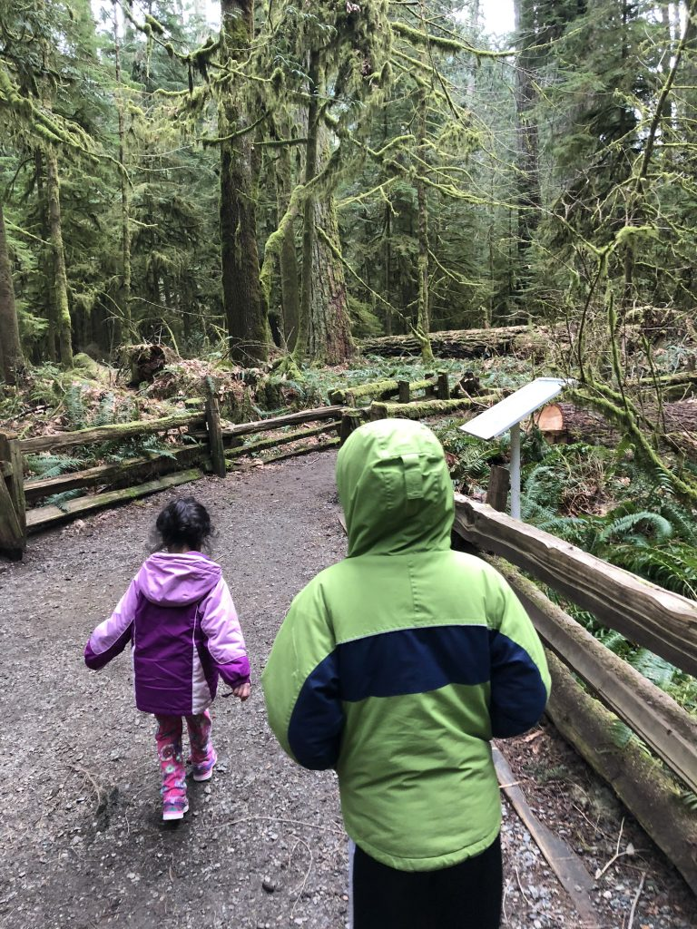 ucluelet and tofino, ucluelet b.c., tofino b.c., road trip through vancouver island, cathedral grove, explore bc parks, taslim jaffer writer